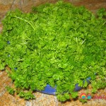 3 bunches curly leaf parsley.